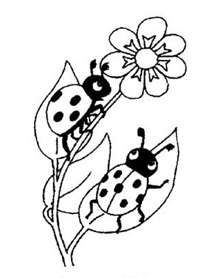 ladybug coloring pages for preschoolers kidsno print free