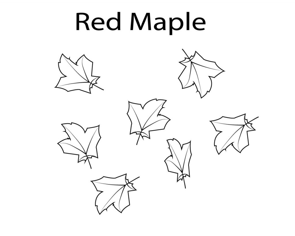 Best Maple Leaf Coloring Pages, red,Toronto,printable