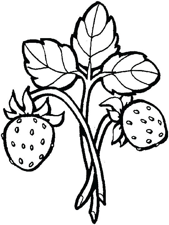 Strawberry Coloring Pages To Print